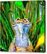 Funny Frog Acrylic Print