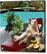 Funny Pet  Vacationing Kitty Acrylic Print