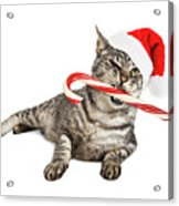 Funny Santa Cat With Candy Cane Acrylic Print