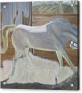 furious Horse Acrylic Print