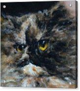 Furry 2 Acrylic Print by Valeriy Mavlo