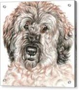 Furry Friend Acrylic Print