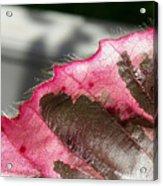 Furry Leaf Acrylic Print
