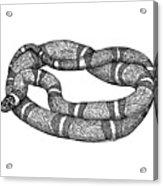 Fursnake Acrylic Print