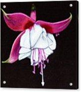Charm Acrylic Print by Ekta Gupta
