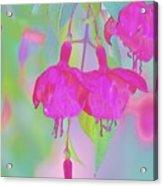 Fuchsia Flower Abstract Acrylic Print
