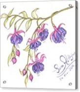Fuschia Flowers Acrylic Print
