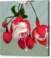 Fuschia Acrylic Print