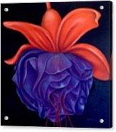 Fussia Acrylic Print