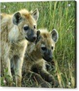 Fuzzy Baby Hyenas Acrylic Print