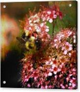Fuzzy Buzzy Acrylic Print