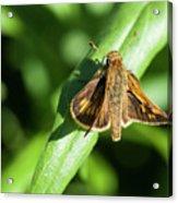 Fuzzy Moth Acrylic Print