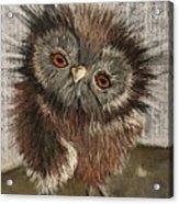 Fuzzy Owl Acrylic Print