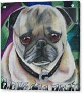 G Dawg Acrylic Print