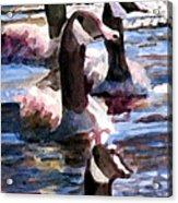 Gaggle Of Geese Acrylic Print