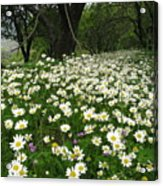 Gaia Blooming Acrylic Print