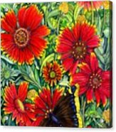 Gaillardia Acrylic Print