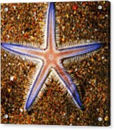 Galapagos Colorful Seastar Acrylic Print