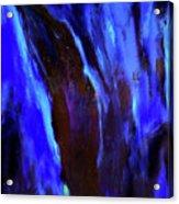 Galilee Cypress Acrylic Print