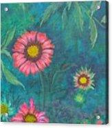 Gallardia Acrylic Print
