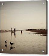 Galveston Seagulls Acrylic Print