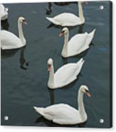 Galway Swans On The Claddagh Acrylic Print