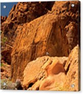 Gambels Quail In Profile Valley Of Fire Acrylic Print
