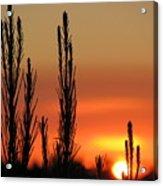 Gambier Sunset Acrylic Print