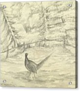 Game Bird By W  Buelow Gould  C 1835  Acrylic Print