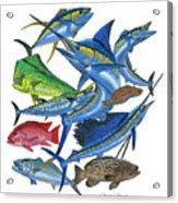 Gamefish Collage Acrylic Print