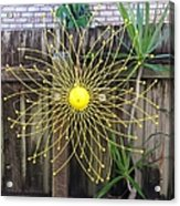 Yellow Sunflower Garden Art Acrylic Print