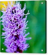 Garden Blooms Acrylic Print