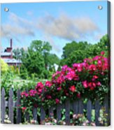 Garden Fence And Roses Acrylic Print