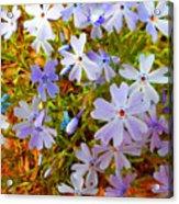 Flower Photography- Floral Art- Digital-floral Fireworks Acrylic Print