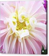 Garden Floral Art Pink Dahlia Flower Baslee Troutman Acrylic Print