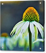 Bristle Flower Acrylic Print