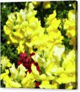 Garden Glory 3 Acrylic Print