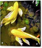 Garden Goldenfish Acrylic Print