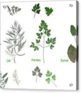 Garden Herbs Acrylic Print
