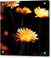 Garden Light Acrylic Print