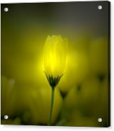 Garden Light Acrylic Print
