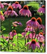 Garden Of Cones Acrylic Print