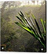 Garden Of Eden Rain Acrylic Print