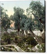 Garden Of Gethsemane Acrylic Print