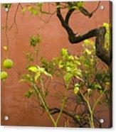 Garden Of The Alcazar Acrylic Print
