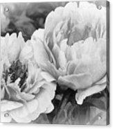 Garden Peonies Acrylic Print