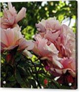 Garden Roses 2 Acrylic Print