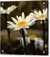 Garden Smiles Acrylic Print