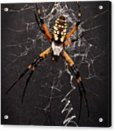 Garden Spider And Web Acrylic Print by Tamyra Ayles