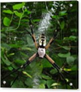Garden Spider Acrylic Print